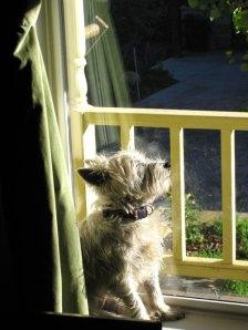 chloe-sunbathing