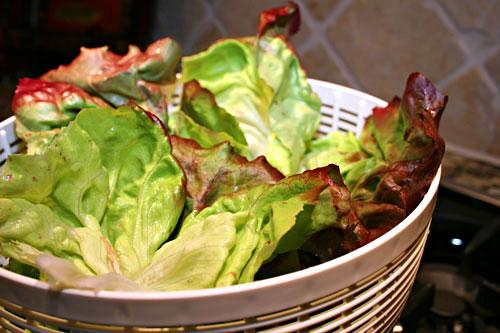 Cleaned-Lettuce