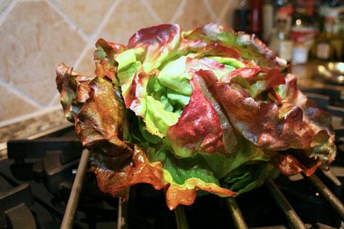 Red-Butter-Lettuce